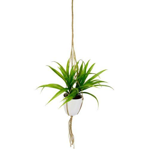 I.GE.A. Kunstpflanze »Dracena« Dracena, , Höhe 35 cm, in Hängeampel
