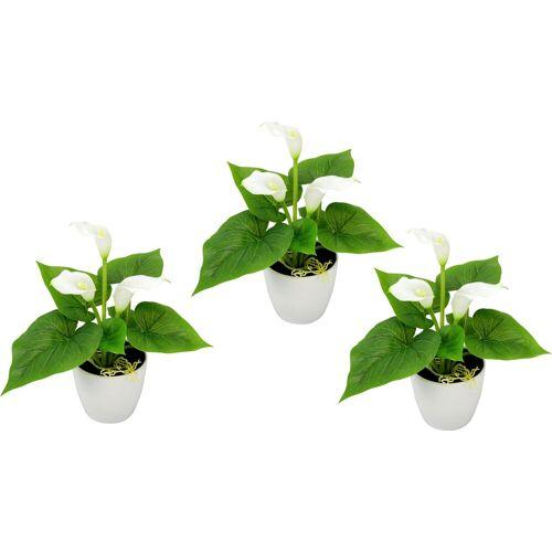 I.GE.A. Kunstpflanze »Mini Calla« Calla, , Höhe 20 cm, weiß