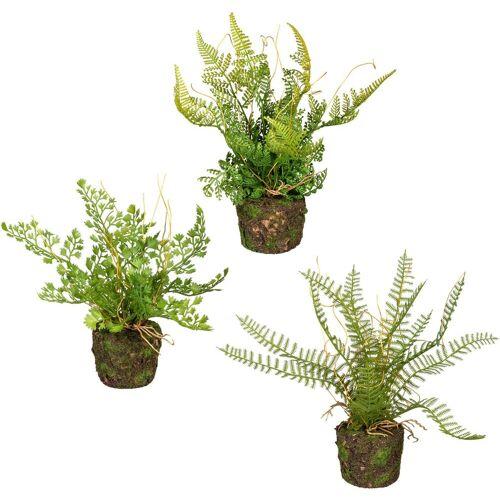 Creativ green Künstliche Zimmerpflanze »Set aus Farnpflanzen auf Wurzelballen« Farn, , Höhe 22 cm, 3er Set