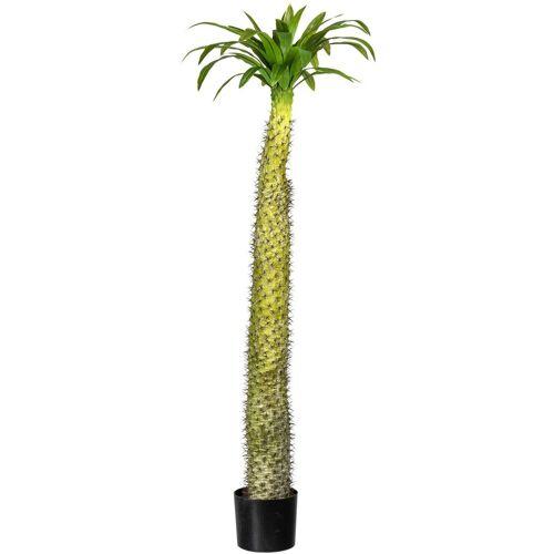 Creativ green Künstliche Zimmerpflanze »Madagaskarpalme Pachypodium« Madagaskarpalme Pachypodium, , Höhe 160 cm