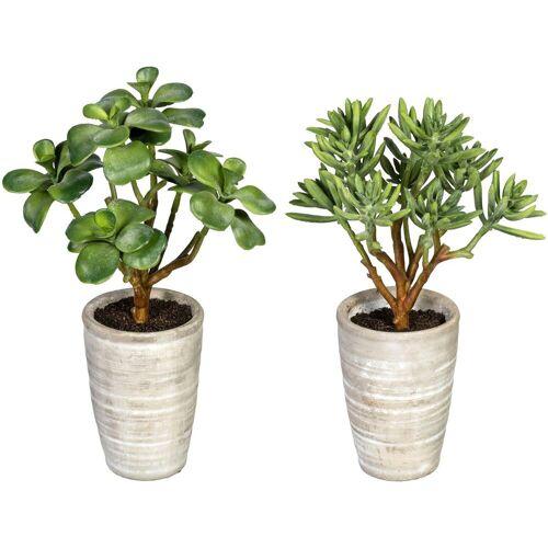 Creativ green Künstliche Zimmerpflanze »Sukkulenten Kalanchoe und Aloe« Sukkulenten Kalanchoe und Aloe, , Höhe 28 cm, im Zementtopf, 2er Set