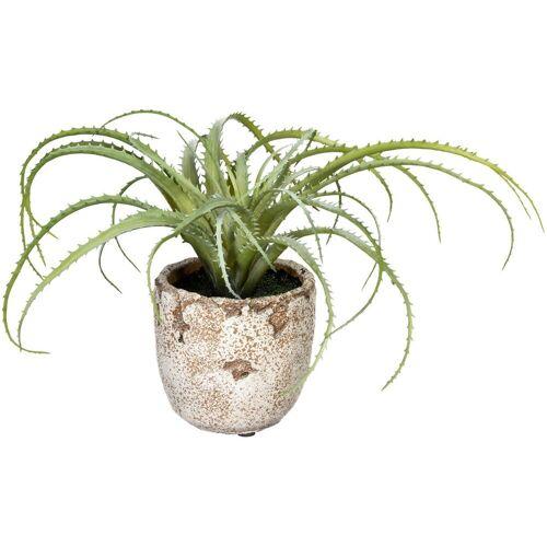 Creativ green Künstliche Zimmerpflanze »Aloe arborescens« Aloe arborescens, , Höhe 18 cm, im Zementtopf