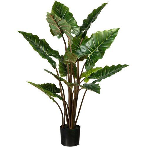 Creativ green Künstliche Zimmerpflanze »Taropflanze« Taropflanze, , Höhe 140 cm