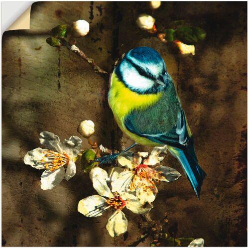 Artland Wandbild »Blaumeise auf Kirschzweig«, Vögel (1 Stück)