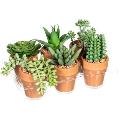Creativ green Künstliche Zimmerpflanze »Mini-Sukkulenten« Sukkulente, , Höhe 9 cm, im Tontopf, 6er Set