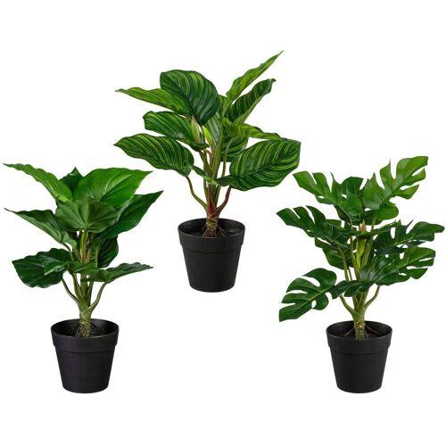 Creativ green Künstliche Zimmerpflanze »Set aus Grünpflanzen« Grünpflanzen, , Höhe 32 cm, 3er Set