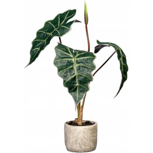 Creativ green Künstliche Zimmerpflanze »Alocasia« Alocasia, , Höhe 60 cm, im Zementtopf