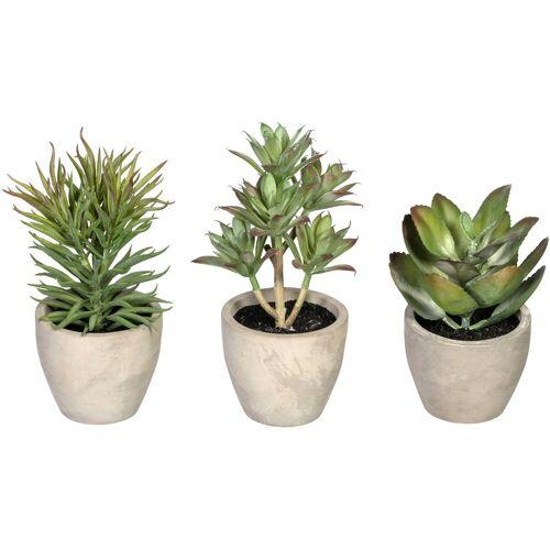 Creativ green Künstliche Zimmerpflanze »Sukkulenten« Sukkulente, , Höhe 15 cm, im Zementtopf, 3er Set