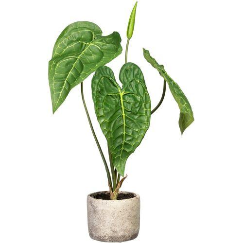 Creativ green Künstliche Zimmerpflanze »Anthurie« Anthurie, , Höhe 60 cm, im Zementtopf