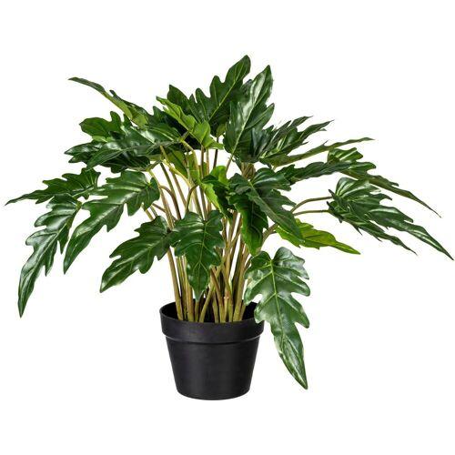 Creativ green Künstliche Zimmerpflanze »Philodendron xanadu« Philodendron xanadu, , Höhe 60 cm
