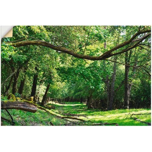 Artland Wandbild »Auf grünem Weg durch den grünen Wald«, Wald (1 Stück)