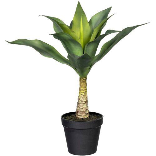Creativ green Künstliche Zimmerpflanze »Agave mit Stamm« Agave, , Höhe 45 cm