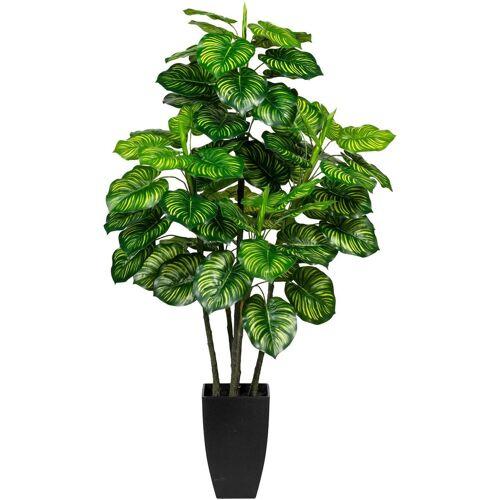 Creativ green Künstliche Zimmerpflanze »Maranta« Maranta, , Höhe 105 cm