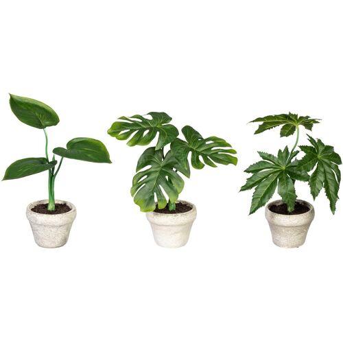 Creativ green Künstliche Zimmerpflanze »Set aus Grünpflanzen« Grünpflanzen, , Höhe 26 cm, im Zementtopf, 3er Set