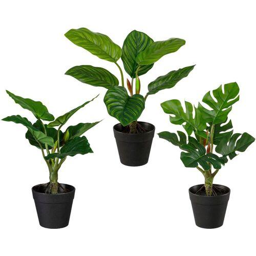 Creativ green Künstliche Zimmerpflanze »Set aus Grünpflanzen« Grünpflanzen, , Höhe 26 cm, 3er Set