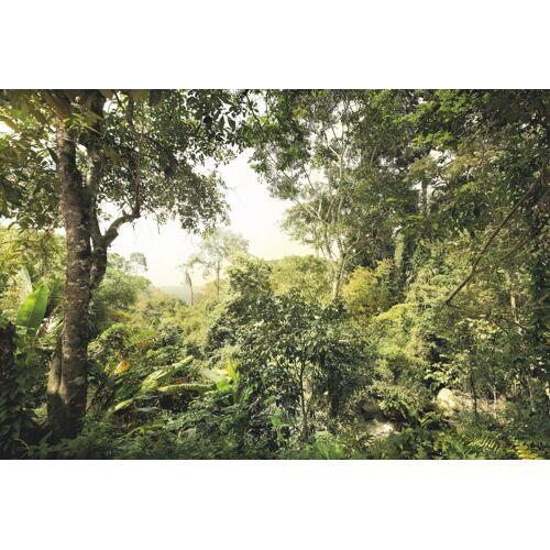 Komar Fototapete »Dschungel«, 4-teilig, grün