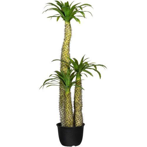 Creativ green Künstliche Zimmerpflanze »Madagaskarpalme Pachypodium« Madagaskarpalme Pachypodium, , Höhe 170 cm