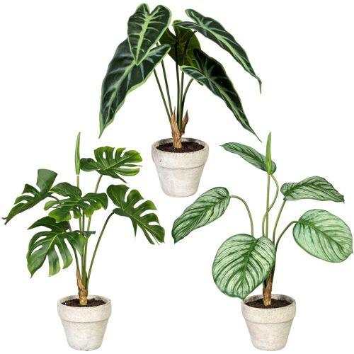 Creativ green Künstliche Zimmerpflanze »Set aus Grünpflanzen« Grünpflanzen, , Höhe 40 cm, im Zementtopf, 3er Set