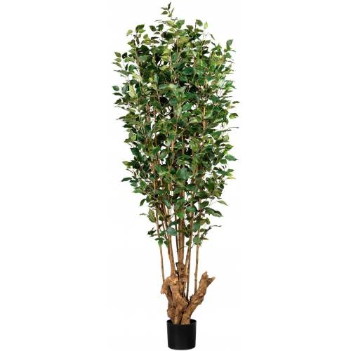Creativ green Kunstbaum »Ficus Benjamini« Ficus Benjamini, , Höhe 175 cm