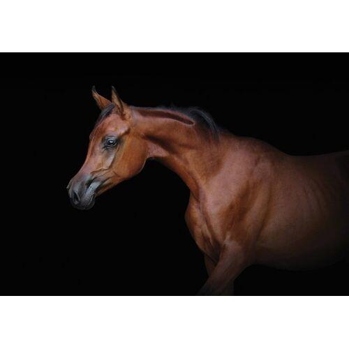 Consalnet Papiertapete »Braunes Pferd«, Motiv