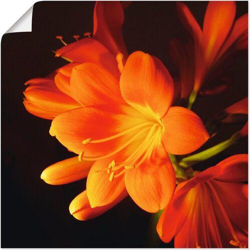 Artland Wandbild »Clivie in leuchtendem Orange«, Blumen (1 Stück)