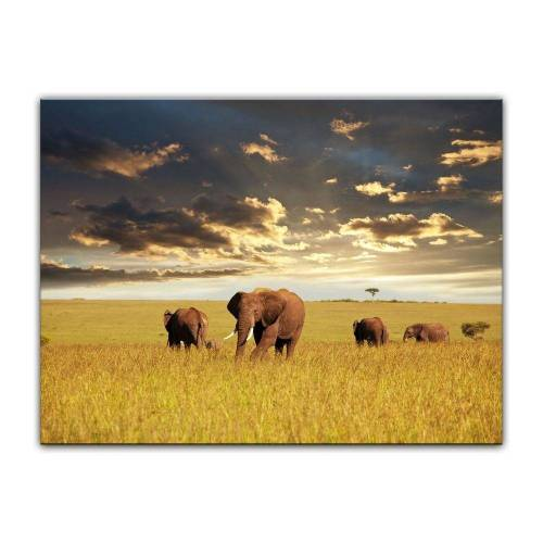 Bilderdepot24 Leinwandbild, Leinwandbild - Elefanten