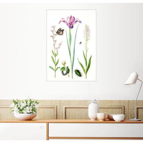 Posterlounge Wandbild, Pechnelke, Rose, Iris & Knabenkraut