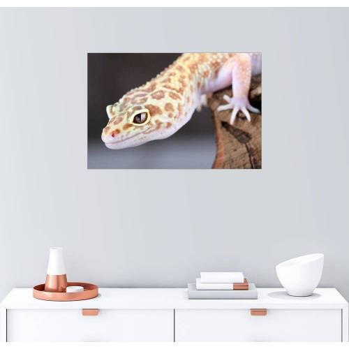 Posterlounge Wandbild, Leopardgecko