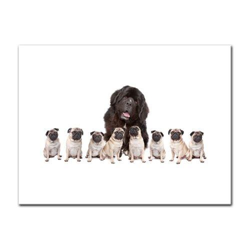 Bilderdepot24 Leinwandbild, Leinwandbild - Grosser Hund mit kleinen Hunden
