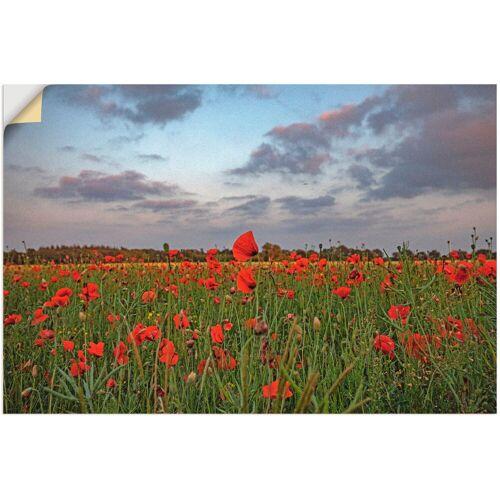 Artland Wandbild »Mohnblumenfeld«, Blumenwiese (1 Stück)