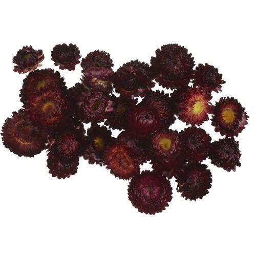 VBS Kunstpflanze »Strohblumenköpfe in Box«, , 20 - 30 g, Rot