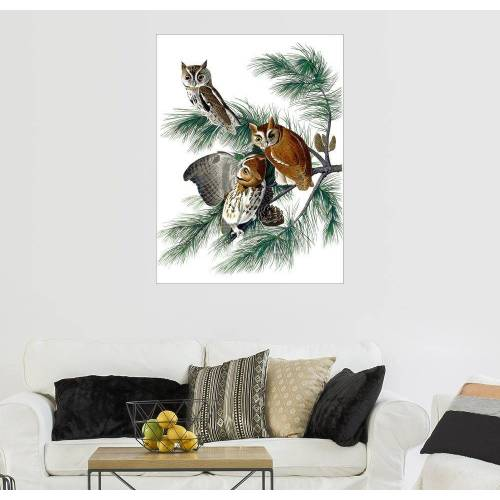 Posterlounge Wandbild, Drei Eulen