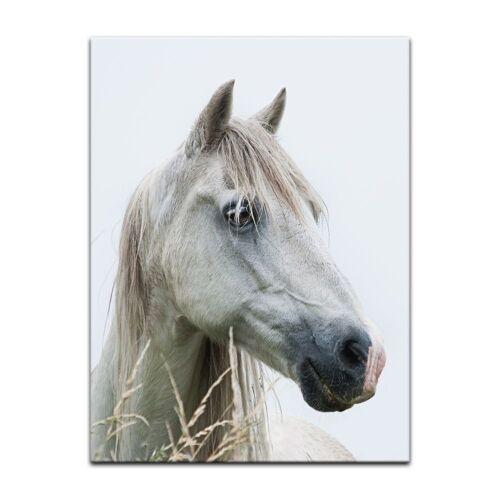 Bilderdepot24 Leinwandbild, Leinwandbild - Pferd III