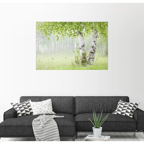 Posterlounge Wandbild, Birkenwäldchen im Nebel