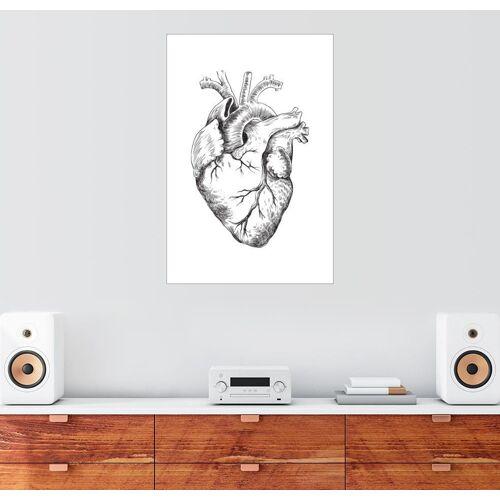 Posterlounge Wandbild, Anatomisches Herz