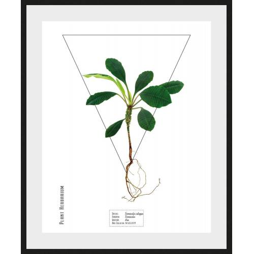 queence Bild »Terminalia catappa«, (1 Stück)