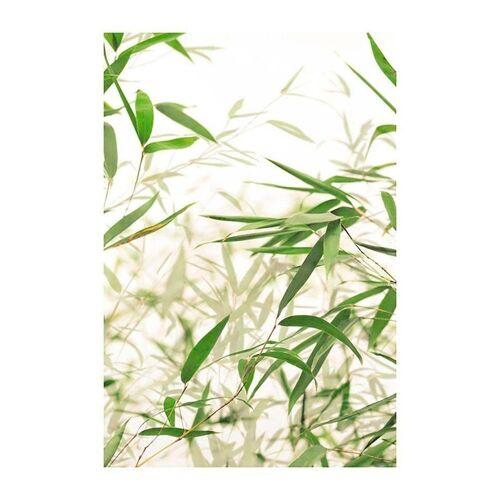 Komar Poster »Bamboo Leaves«, Pflanzen, Blätter, Höhe: 50cm