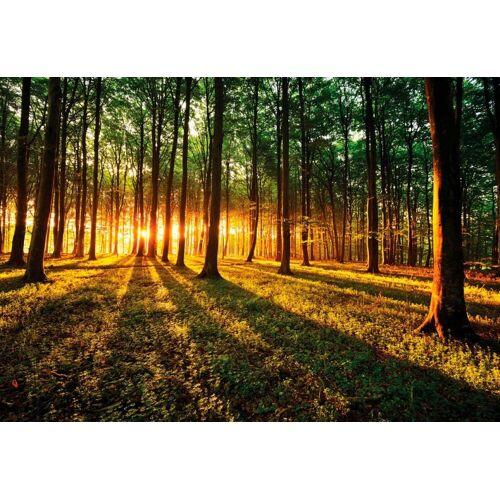 Fototapete »Sonnenaufgang im Wald«, Wald, 368/254 cm, grün