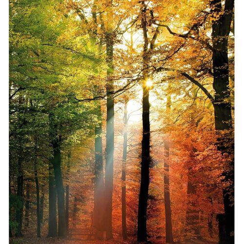 Vliestapete »Goldener Herbst«