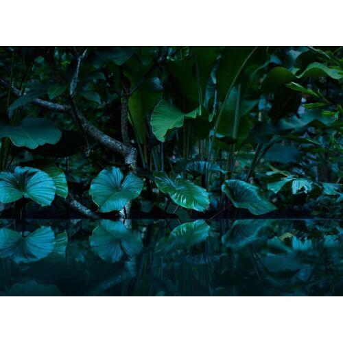 living walls Fototapete »Tropical Leafs Vlies«, matt, glänzend, 350 x 255 cm, bunt