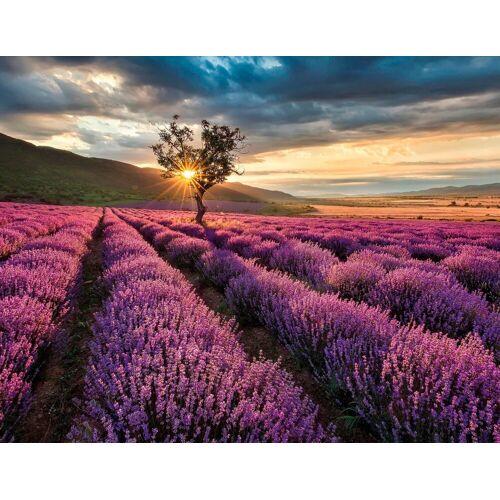 living walls Fototapete »Lavendelfeld«, glatt, floral, natürlich, Motiv, botanisch, (1 St), glatt
