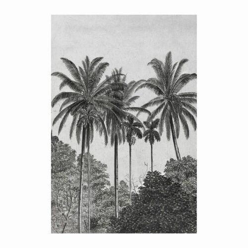 ART for the home Fototapete »Palmen«, 200 cm Länge, schwarz/weiß