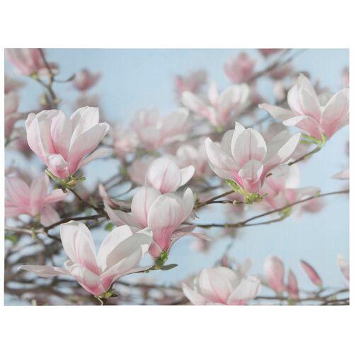 Komar Fototapete »Magnolia«, bunt