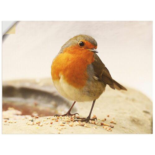 Artland Wandbild »Rotkehlchen«, Vögel (1 Stück)