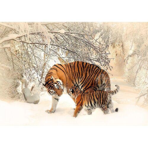 Consalnet Papiertapete »TIGER«, 254 x 184 cm, braun/weiß/beige