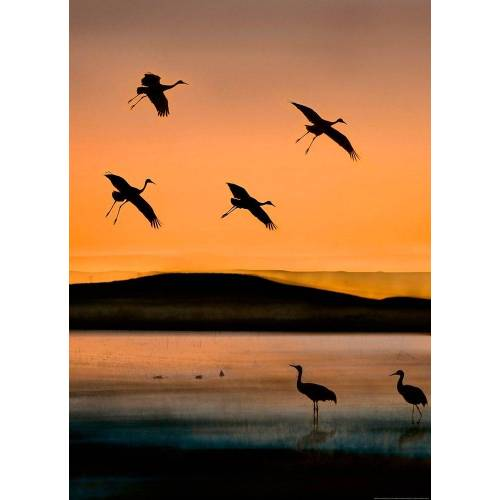 Idealdecor Fototapete »Vögel Sonnenuntergang«, BlueBack, 2 Bahnen, 183 x 254 cm, bunt