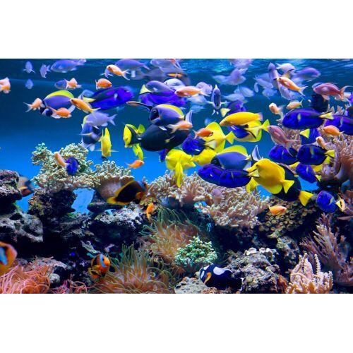 Papermoon Fototapete »Aquarium«, glatt