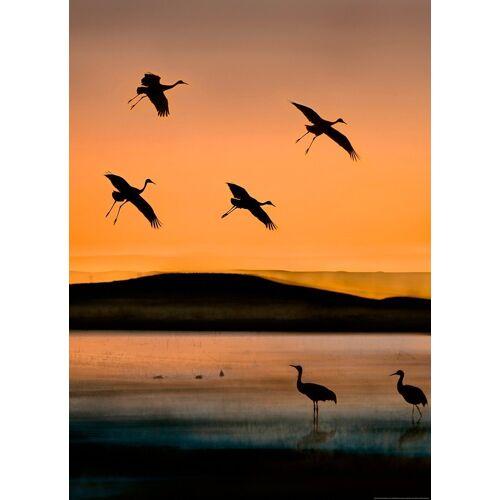 Idealdecor Fototapete »Vögel Sonnenuntergang«, Vlies, 2 Bahnen, 183 x 254 cm, bunt