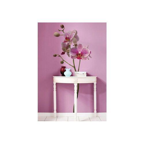 Komar Wandtattoo »Orchidee«, lila