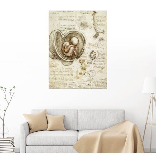Posterlounge Wandbild, Studien des Embryos